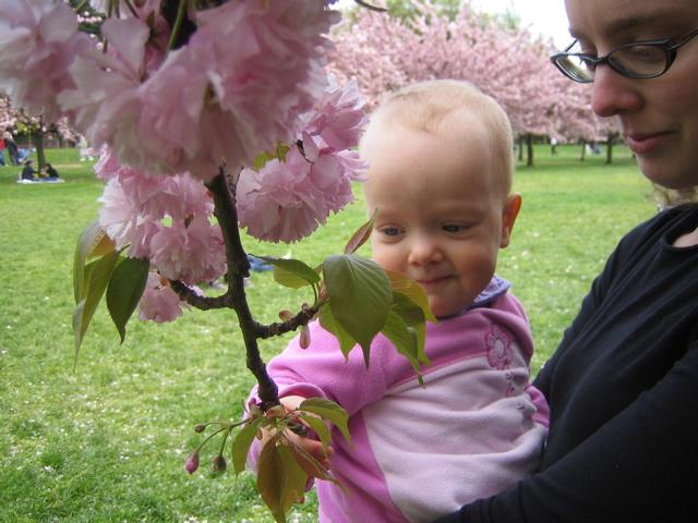 Touching a cherry branch